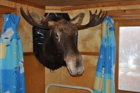 Head of Moose.jpg