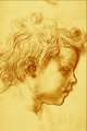 Head of a Child - Andrea del Sarto.png