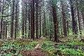 Hiking trail Upplandsleden, Sweden 07.jpg