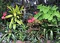 Hillwood Gardens in July (19613732010).jpg
