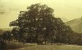 Hindenburglinde, 1900.PNG
