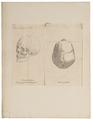 Homo sapiens - Georgië - 1700-1880 - Print - Iconographia Zoologica - Special Collections University of Amsterdam - UBA01 IZ19400212.tif