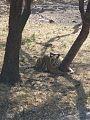 Hyd zoo 1.jpg