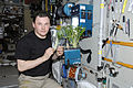 ISS-21 Roman Romanenko with a plants growth experiment in the Zvezda module.jpg
