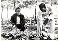 IVS Horticulturalist Triumfo Briones and a Sudanese Counterpart Work at the Project Development Unit, Yei, Southern Sudan, 1977 (13875574785).jpg