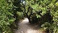 Ilha do mel por Edson Castro 16.jpg