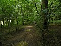 In Badgerdell Woods - geograph.org.uk - 1413505.jpg