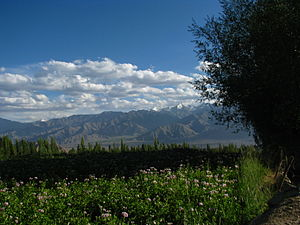 Leh district - Image: India Ladakh Leh 053 flower fields outside my guesthouse (3844435507)