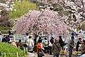 Inokashira Park 2009-04-05 (3446864126).jpg