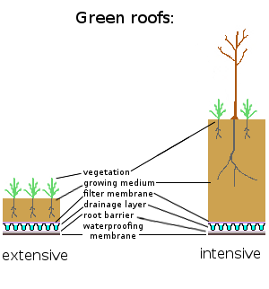 Intensive extensive green roofs