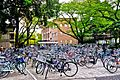 International Christian University Bicycles Parking Area.jpg