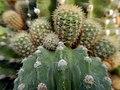 "Iran-qom-Cactus-The greenhouse of the thorn world گلخانه کاکتوس ""دنیای خار"" در روستای مبارک آباد قم- ایران 13.jpg"