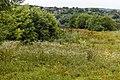 Izvoare – Risipeni, monument al naturii img 025.jpg