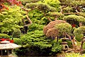 Japanese Garden - Cottered Hertfordshire (9114121461).jpg