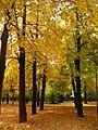 Jardín del Príncipe - Aranjuez - panoramio.jpg