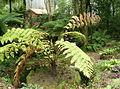 Jardim da Condessa d1Edla 10.jpg