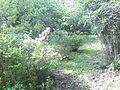 Jardin botanique (Strasbourg) (2).jpg