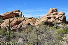Cacti and other desert plants surround a rock formation with horizontal banding.