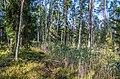 Jersikas pagasts, Latvia - panoramio (9).jpg