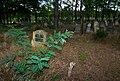 Jewish cemetery Otwock (Karczew - Anielin) IMGP7648.jpg