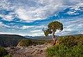 Juniper tree along the trail (c577f4b3-ec35-454e-b09d-ffbcee1c39ef).jpg