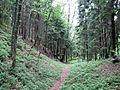 Juodkrantė forest.jpg