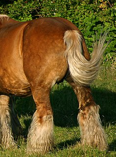 Tail (horse)