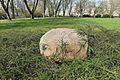 Kamień upamiętniający Jacka Kuronia w parku Żeromskiego w Warszawie.jpg