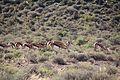 Karoo National Park 2014 17.jpg
