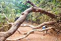 Kasturba Rd, Matheran, Maharashtra 410102, India - panoramio (23).jpg