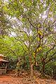 Kasturba Rd, Matheran, Maharashtra 410102, India - panoramio (96).jpg