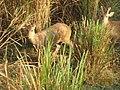 Kaziranga National Park, Assam, India 08.jpg