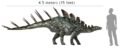 Kentosaurus size comparison with human.png
