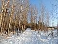 Kerry Wood Nature Conservatory (32856105271).jpg