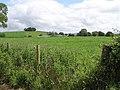 Killycowan Townland - geograph.org.uk - 877228.jpg