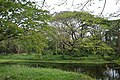Kings Lake - AJC Bose Indian Botanic Garden - Howrah 2018-04-01 2318.JPG