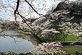 Kitanomaru Park 20190406-2.jpg