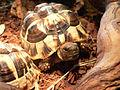 KleineSchildkröte2.JPG