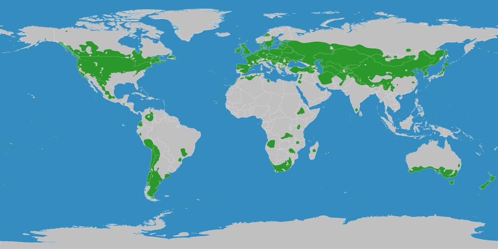 Karte der Kühlgemäßigten Klimazone