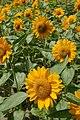 Kobe Nunobiki Herb Garden03n3200.jpg