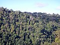 Kuranda QLD 4881, Australia - panoramio (77).jpg