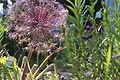 Kwiat w ogrodzie.jpg