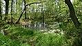 LSG Wietzetal Erlenbruchwald 01.jpg