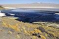 Laguna Colorada 01.jpg