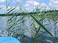 Lake Białe - panoramio.jpg