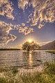Lake Tree (154747861).jpeg