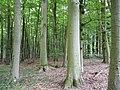 Landschaftsschutzgebiet Horstmanns Holz Melle -Waldende- Datei 3.jpg