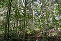 Landschaftsschutzgebiet Solling – Lunau-Tal bei Hardegsen - Lunau-Wald (1).jpg
