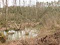 Landschaftsschutzgebiet Zerweliner Heide in 17291 Nordwestuckermark.jpg