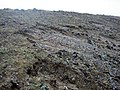 Landward side erosion - geograph.org.uk - 612829.jpg